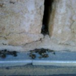 mouse droppings from a brick gap entry point