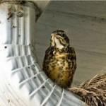 Bird Removal Service