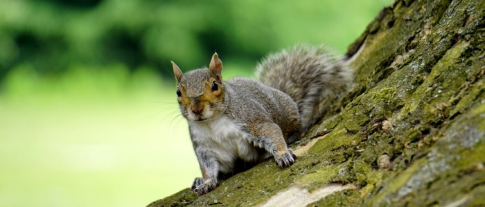 Squirrel Baby Season – Don't Let them Take Residence in Your Home