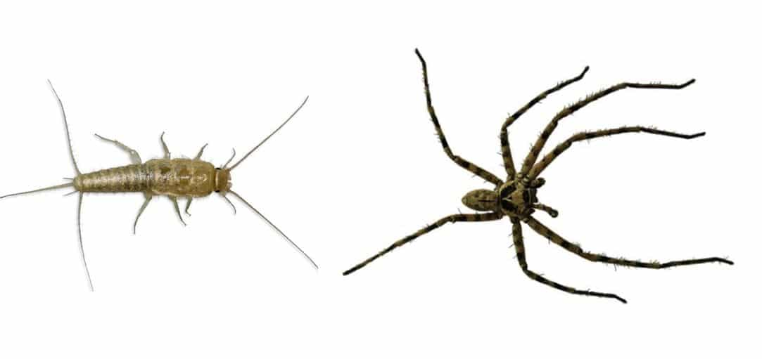 tips for getting rid of silverfish and spiders pest control