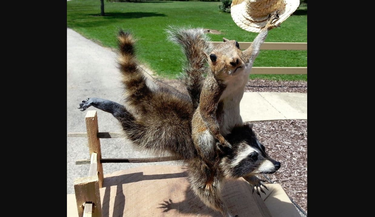 Squirrels Raccoons Or Bats Which Is Worst To Have In