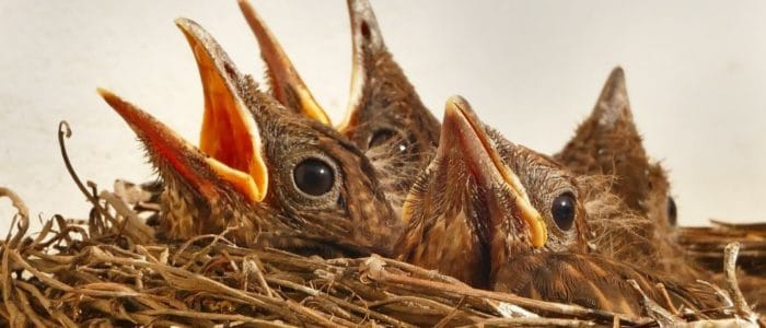 Birds Nests in Vents? Get Rid of them Now!