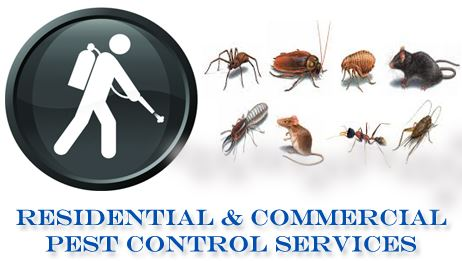 Residential Commercial Pest Control Services
