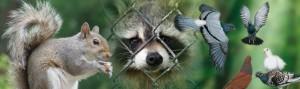 Wildlife Removal Tips Halton - Burlington, Oakville Milton