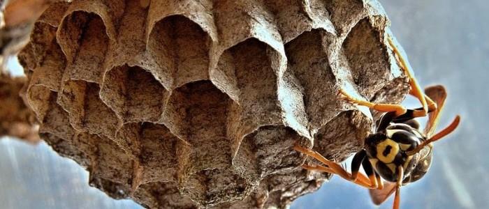 Wasps Infiltrate Halton – Safety Tips for Burlington and Oakville Residents