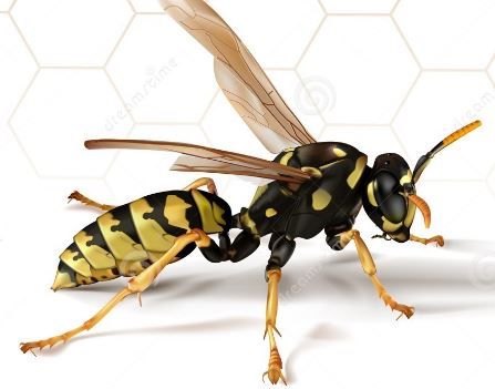 Wasp Removal Halton Burlington Oakville