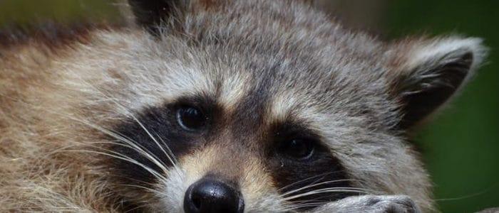 Animals Under the Deck – Now What?