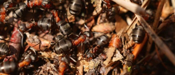 Why Ants in the House is Bad News (And What to Do About it Now!)