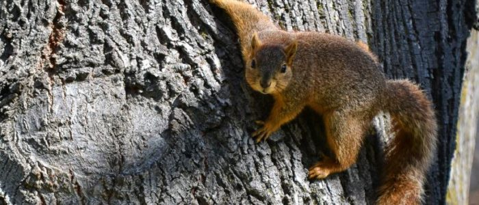 Squirrel Baby Season on Now! Things You Need to Know About Baby Squirrels