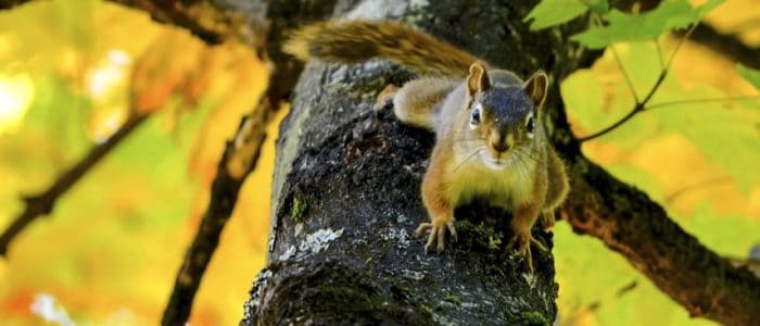 Why Fall is Wild for Wildlife – and Your Home
