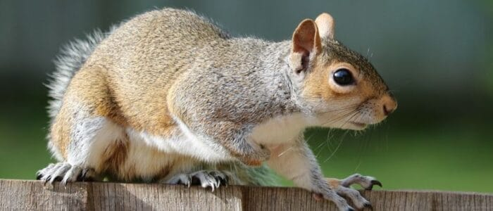 What is the cost to remove squirrels from my home?